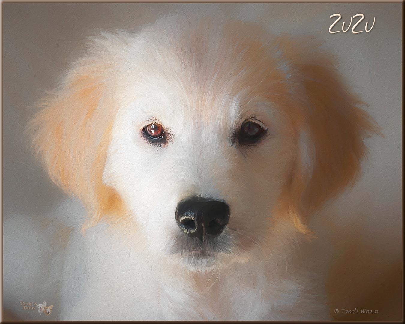 Portrait of Golden Retriever puppy