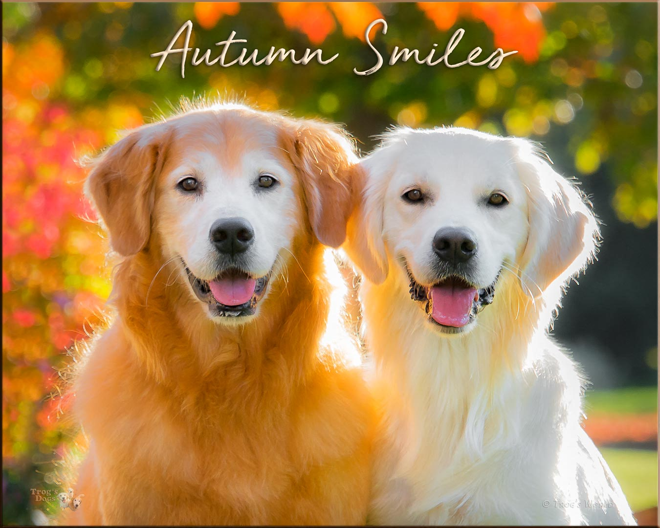 Two Golden Retrievers smiling on an autumn day