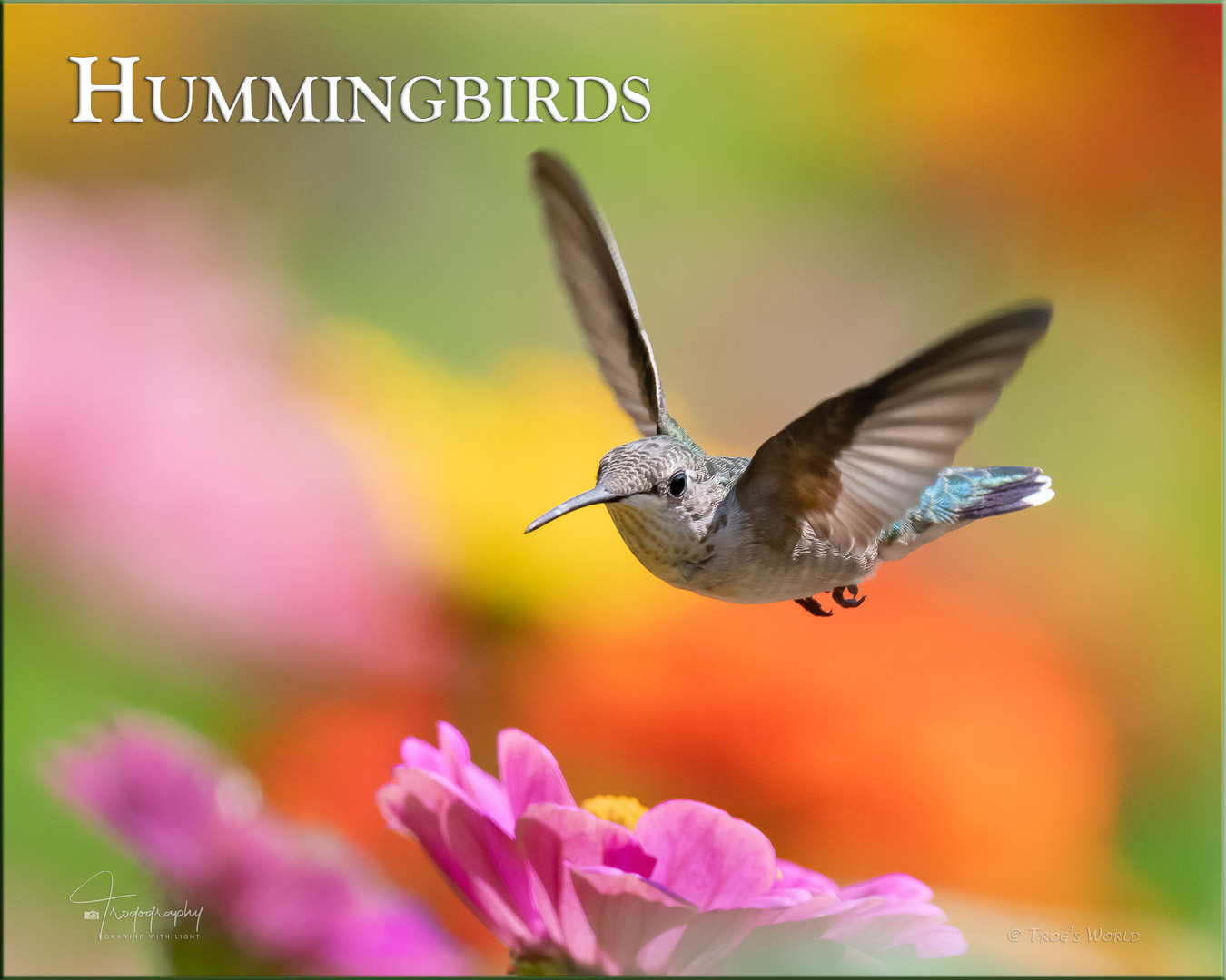 Hummingbird hovering over the flowers