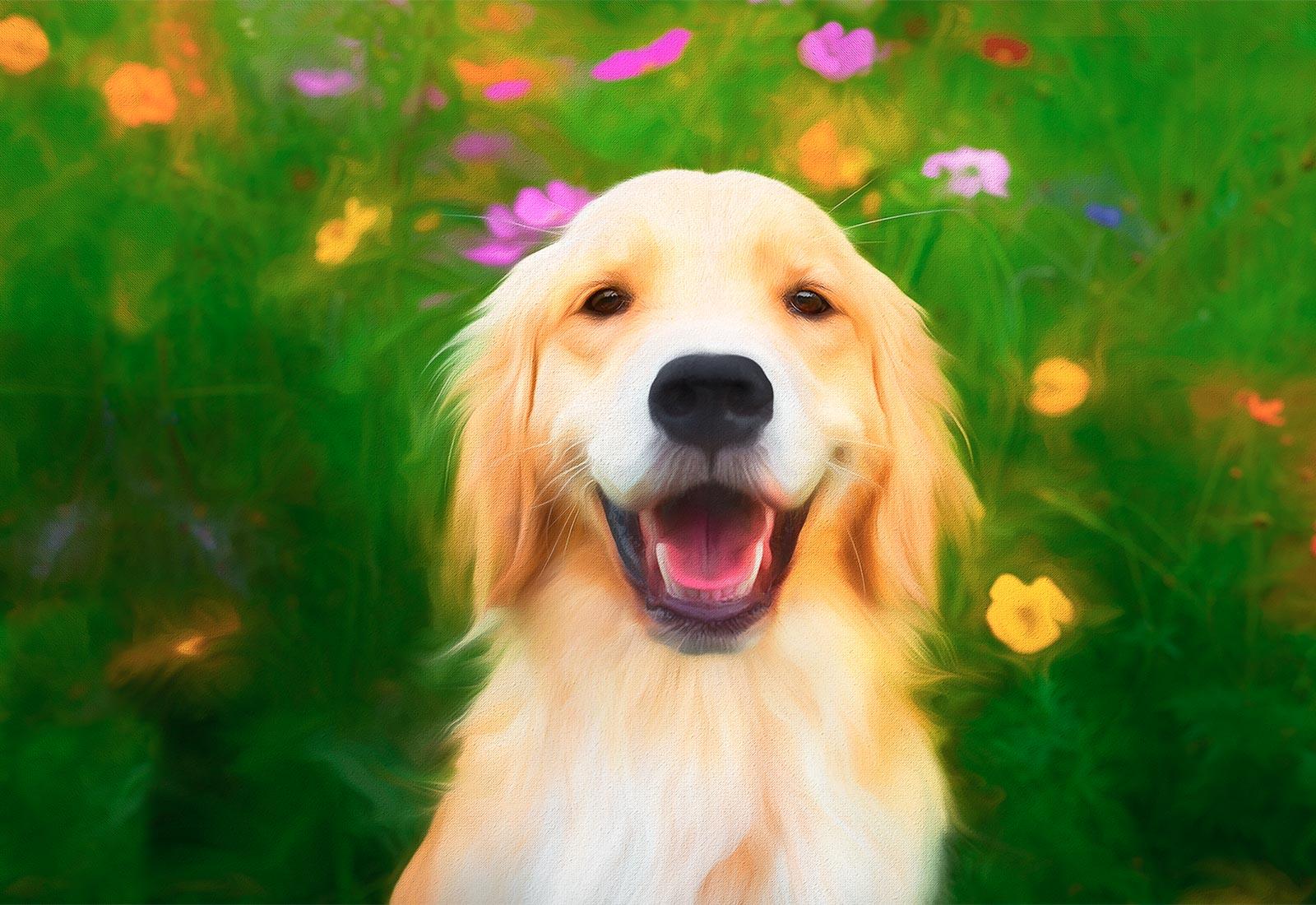 Golden Retriever smiling in the flowers