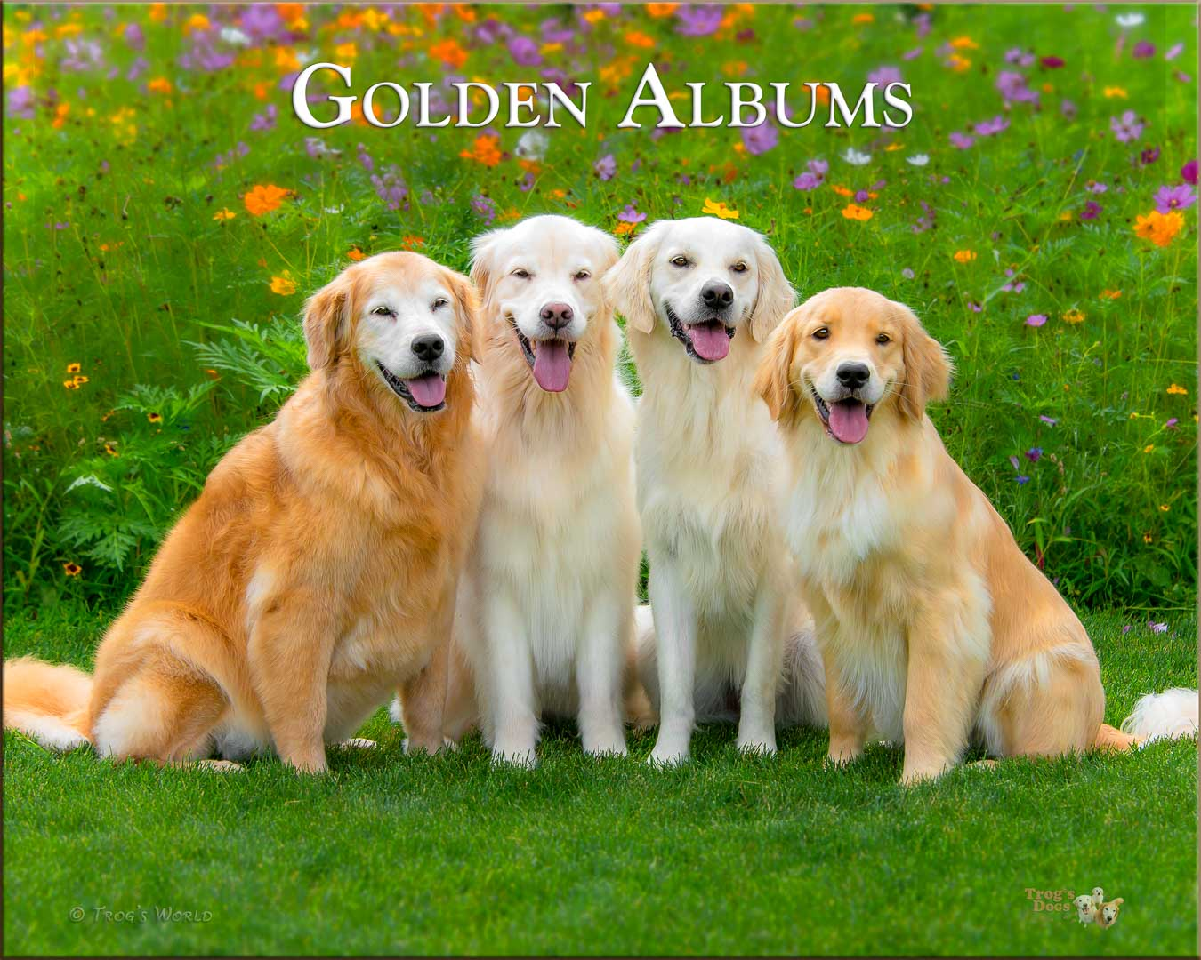 Four Golden Retrievers sitting with the flowers