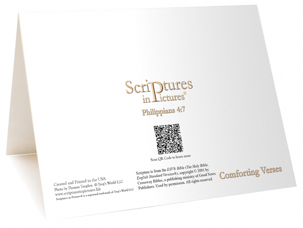 Back of Comforting Verses II Greeting Card